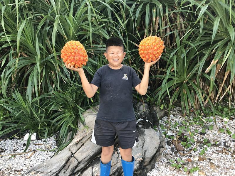 这果子你吃过吗?小六村长看到摘来尝鲜,传言当年它的籽非常值钱