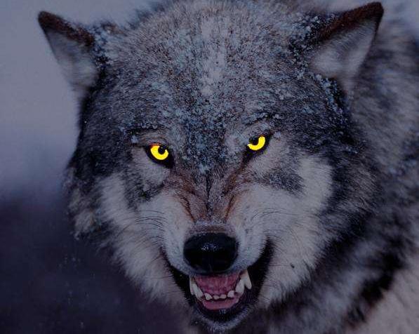 """""""杀破狼3""""阻击""""战狼2"""",两狼之争,必有一伤!"""