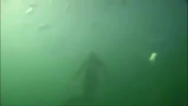 农村钓鱼人海边拍摄到真正的美人鱼,比想象中的漂亮