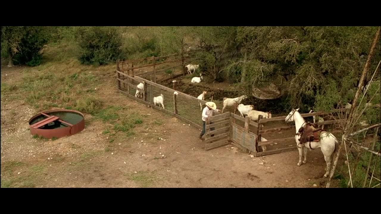 胡安来到羊圈,看见一只狐狸,最后竟做出这种事
