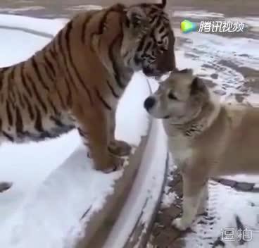 亲爱的,我这样吻你你感动么?