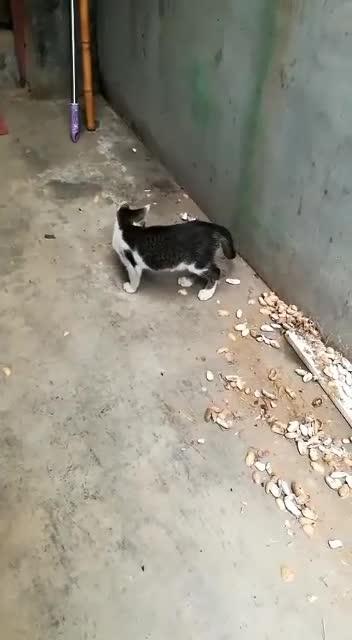 这只老鼠是在调戏猫吗
