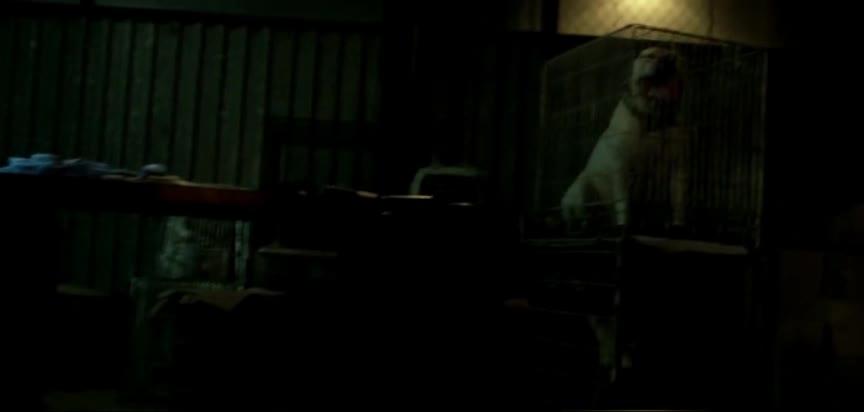参加地下斗犬比赛 狂撕咬场面血腥