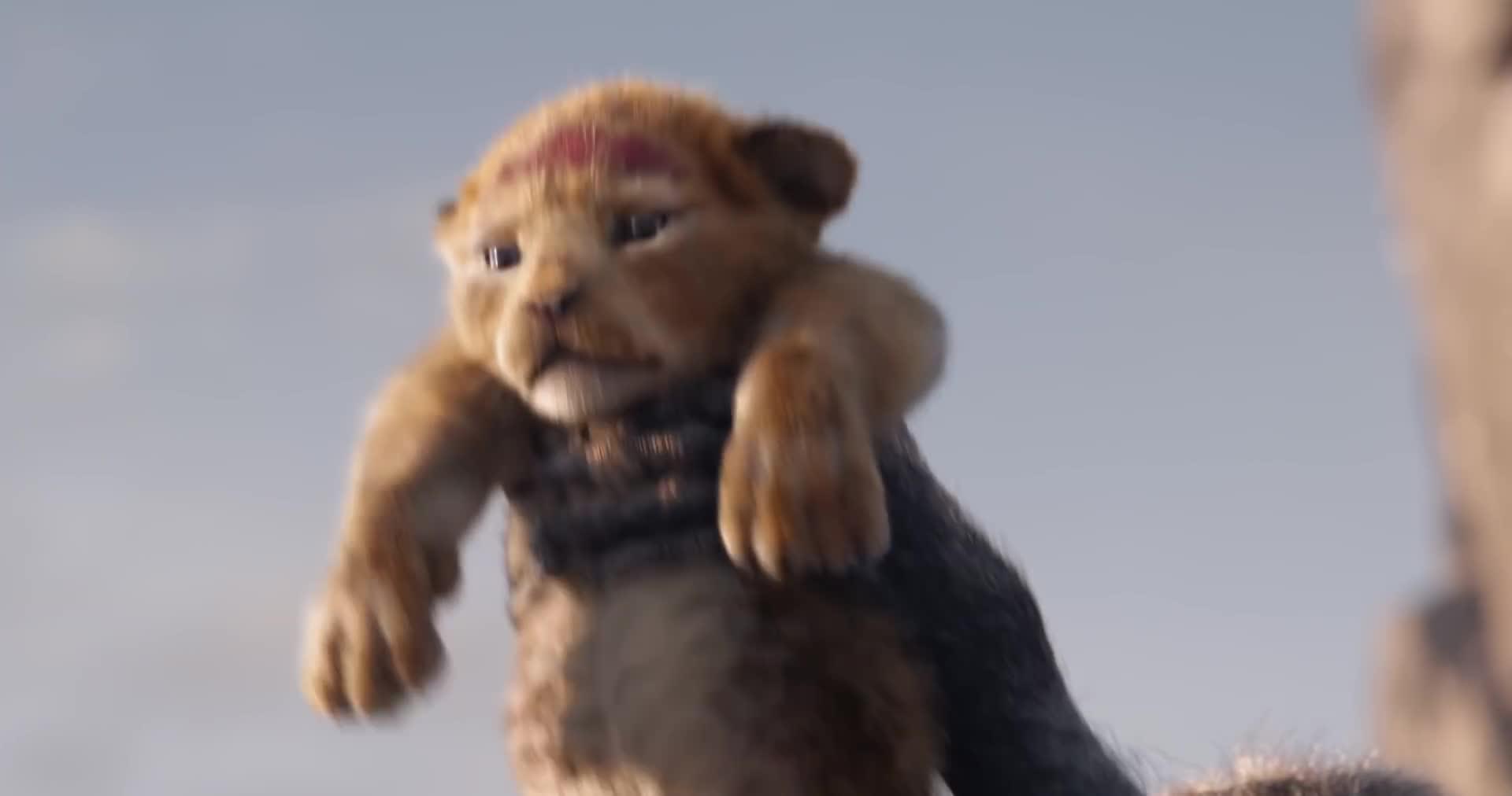 《狮子王》真人版预告来袭,非洲狮子原来是演技派