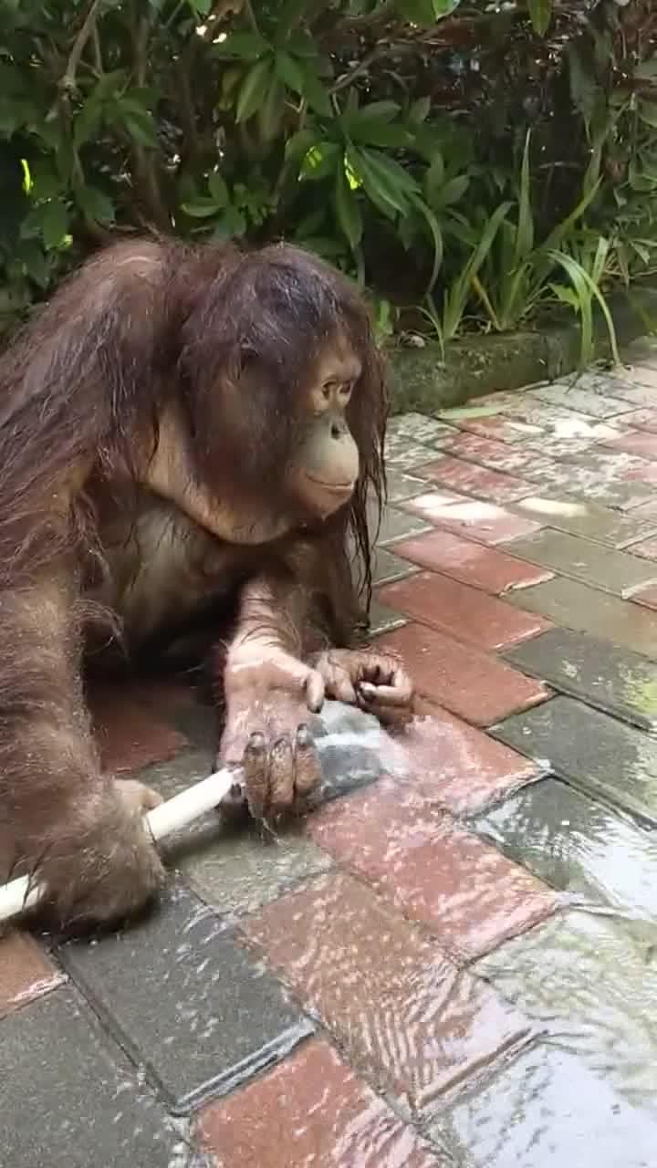 #搞笑趣事#幸亏进化的快,不然玩水的就是我了
