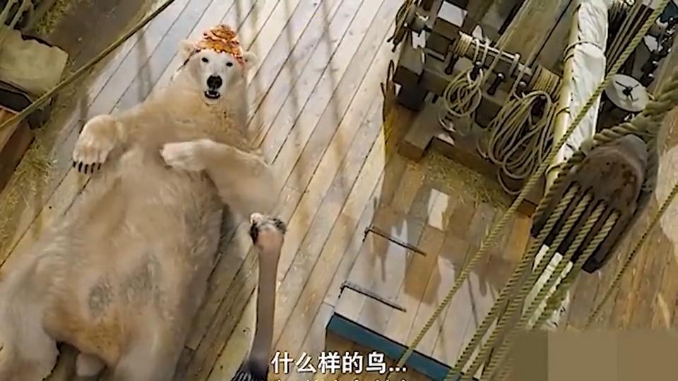 #一起看电影#什么样的北极熊会把皮肤晒黑