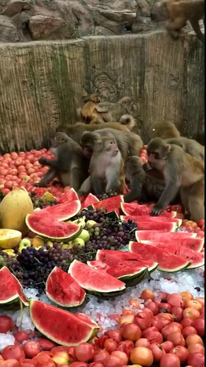 #花果山水果宴#花果山水果宴,这待遇,这牌面,请问还有谁?