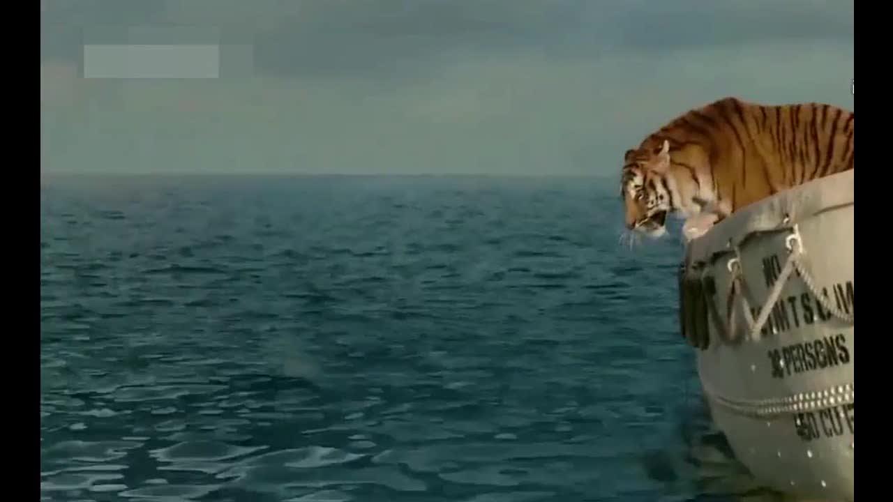老虎为了生存,不得不自己下海捕鱼吃,结果惨了