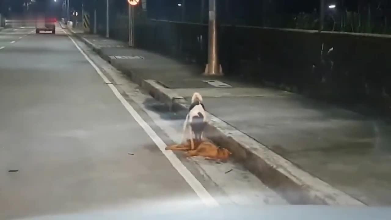 狗狗失去了同伴, 路人拍下这段感人画面