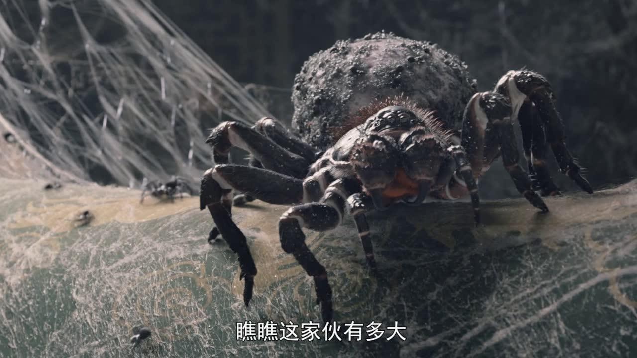 巨型蜘蛛目视人类,李冰冰选择无视,掩耳盗铃装作看不见