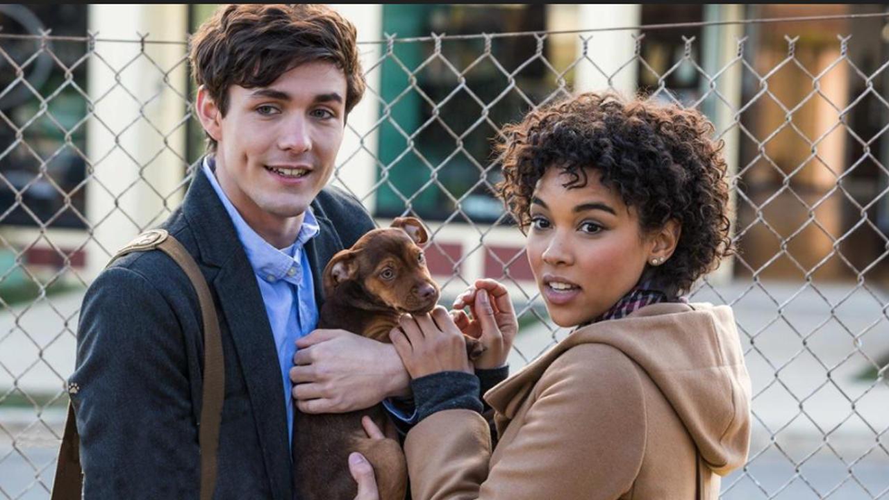 用爱情剧打开《一条狗的回家路》支撑她奔波千里的勇气,正是依恋