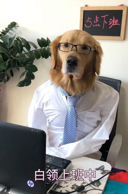 #新年套路#上班狗的工作日常
