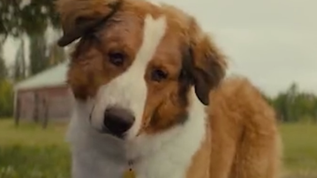 《一条狗的使命2》贝利守护主人的孙女,感人指数再度提升