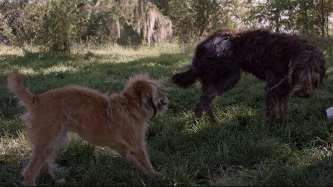#经典看电影#狗狗为了救小主人,求助了嗅觉灵敏的流浪狗,最后还救了主人的命