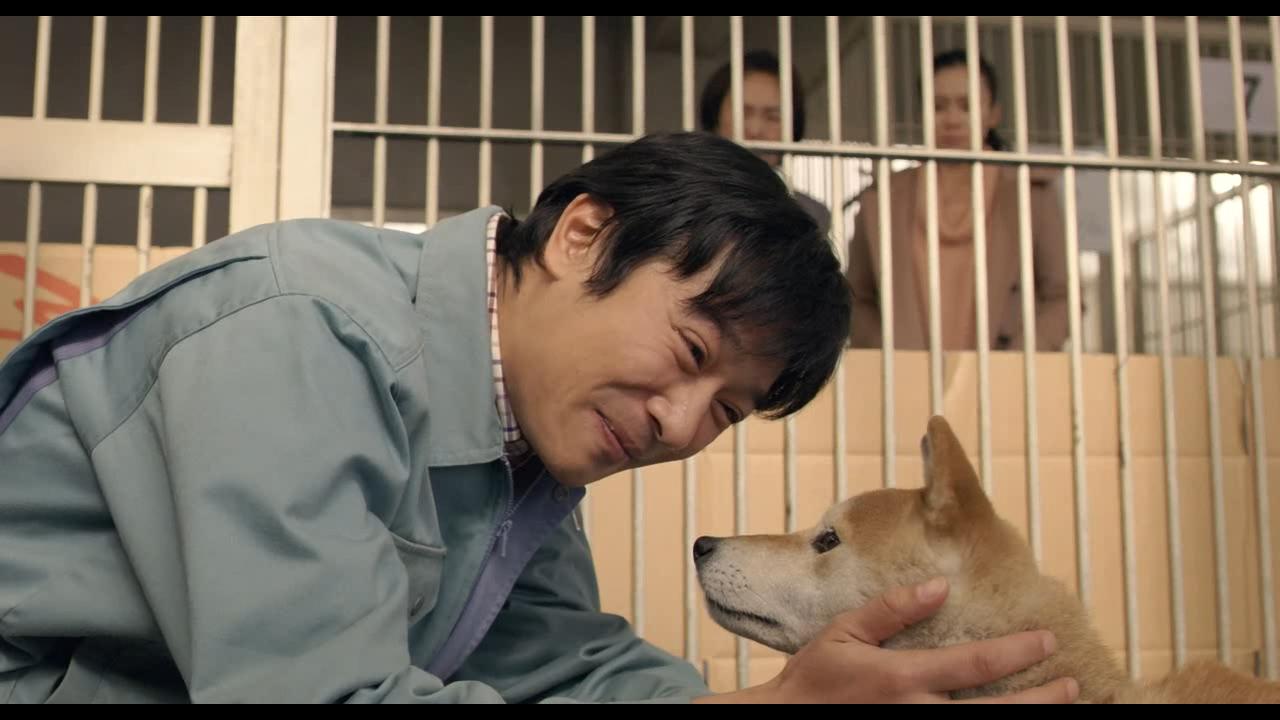 #经典看电影#男子用他的真诚与泪水,成功打动了一条恶犬,并把它救了!