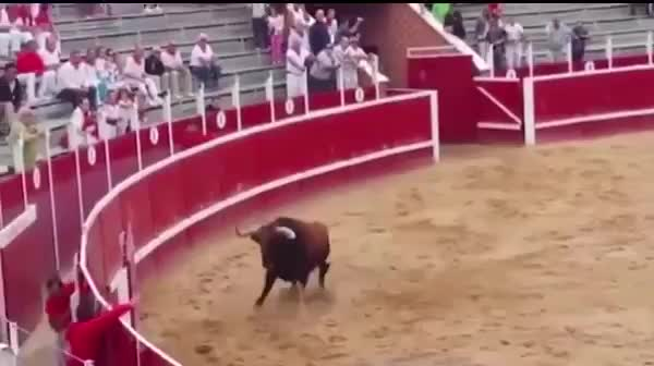 可怕的牛碰撞,两败俱伤,当场死亡!