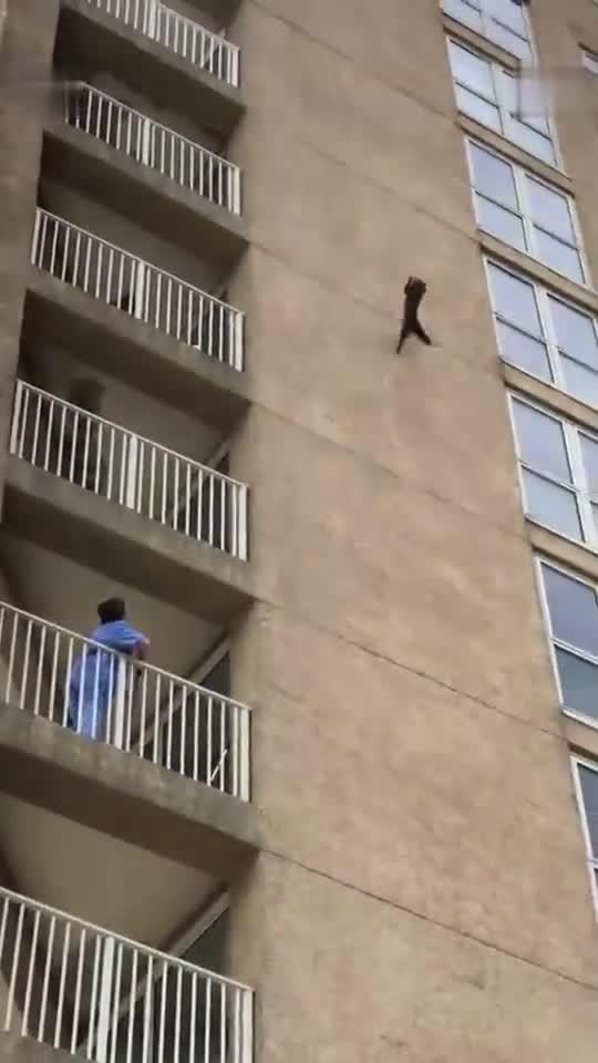 命大! 一只浣熊从9楼外墙掉下, 毫发无损转身离去