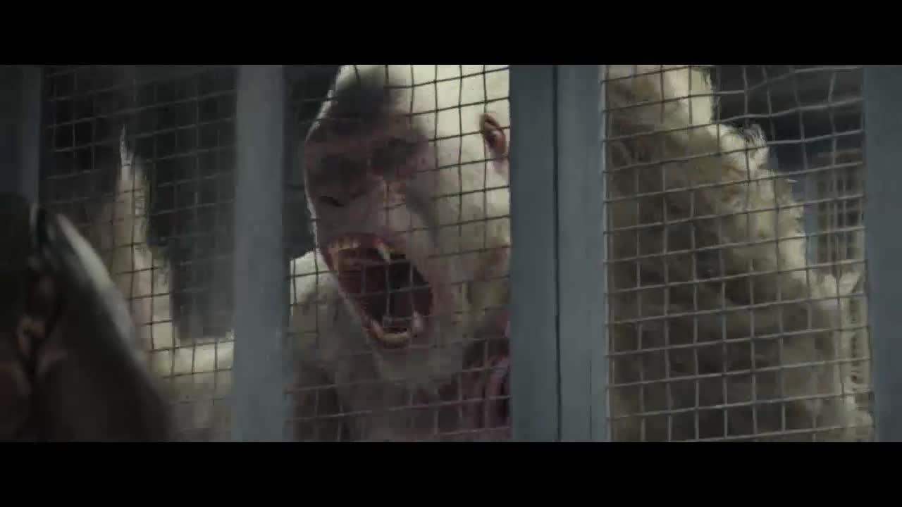 药物的发作使猩猩变的更大,攻击力也变高了,一秒破笼而出