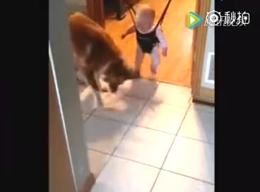 宝宝是个好宝宝,狗是不是正经狗就不知道了