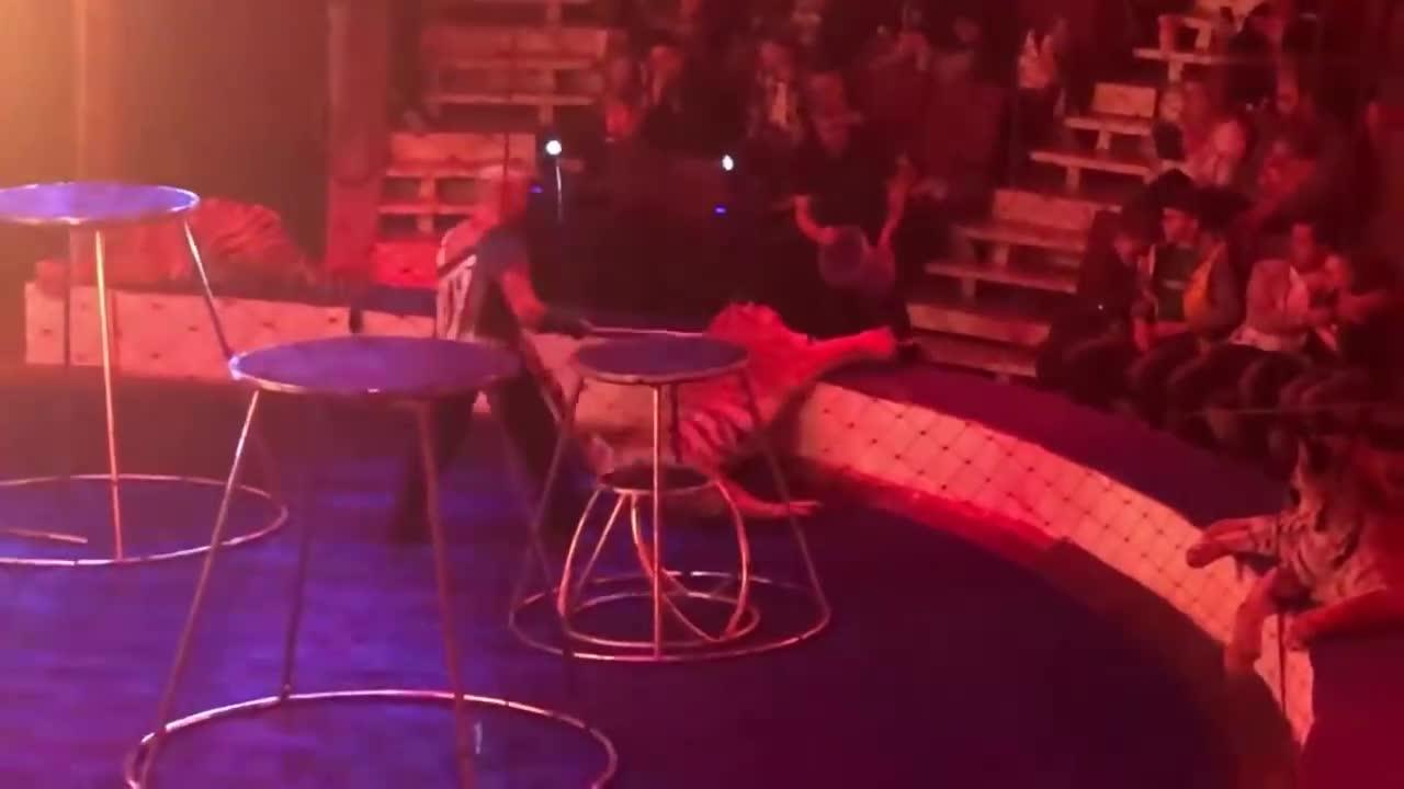 马戏团表演节目, 一只老虎突然犯病, 观众拍下全过程