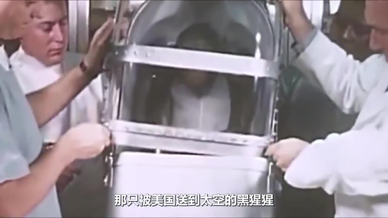 当年被美国送上太空的黑猩猩,现在怎么样了?看完鼻子一酸