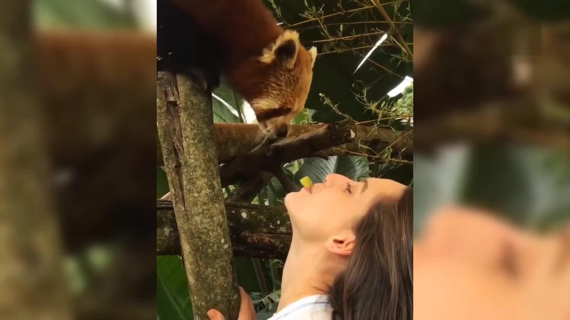 """姑娘嘴对嘴喂食浣熊,""""方便面君""""好幸福!"""