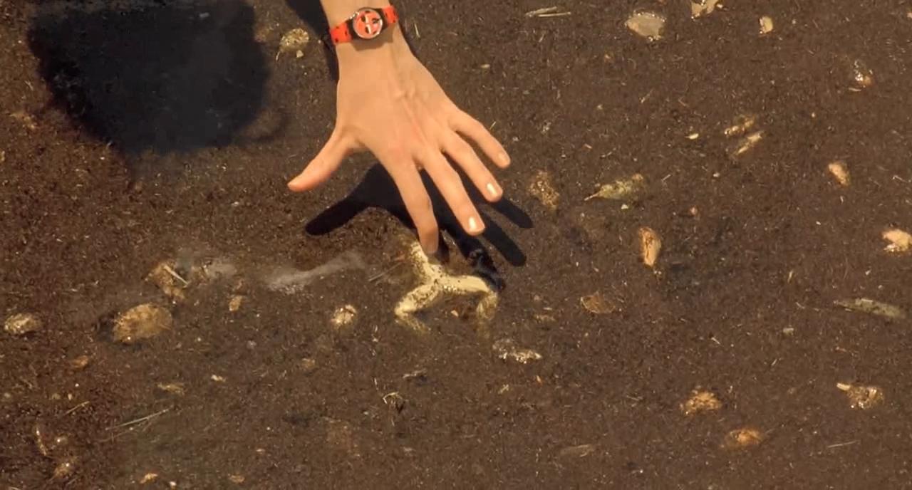 #经典看电影#女子在河里发现了死青蛙,调查之下,发现了不可告人的事情!