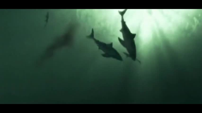 白垩龙幼龙你们也敢吃?这下鲨鱼是碰上硬茬了!你们一个都跑不了