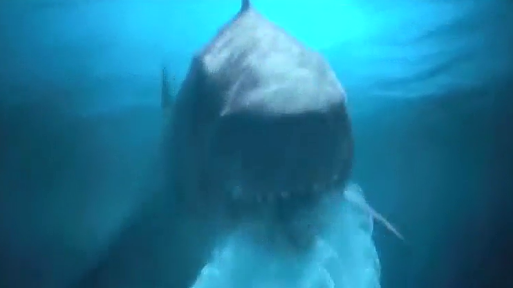 超大的鲨鱼,来到的海滩,准备吃人,结果被声波干扰