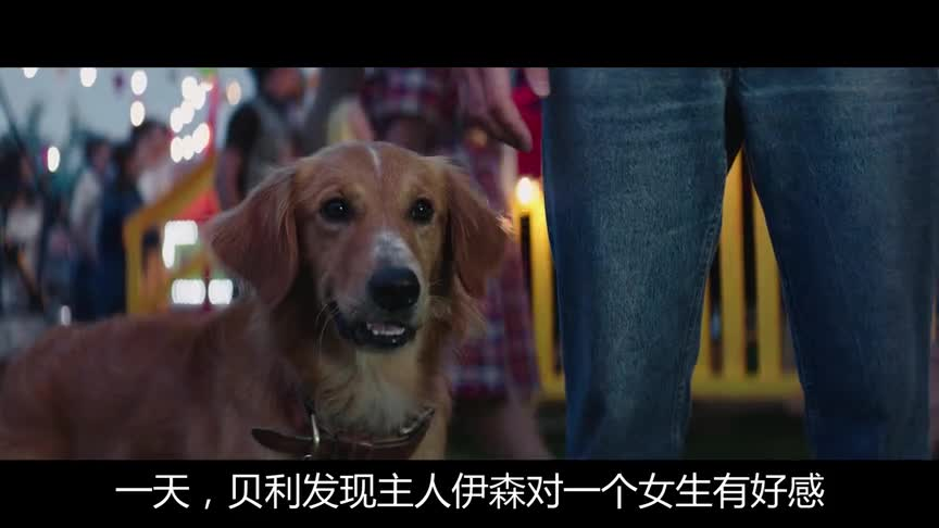 #电影#大白说电影《一条狗的使命》