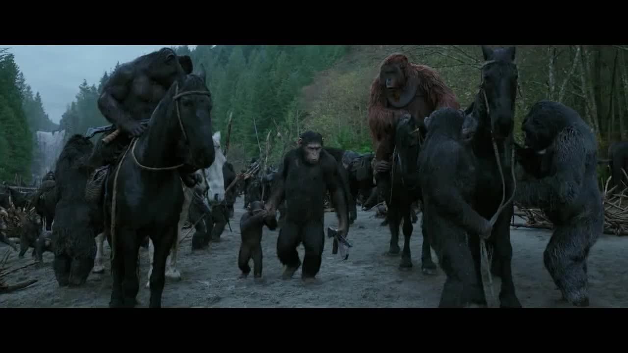 猩猩们准备去建立新家园,而老大却决定留下,去向人类复仇