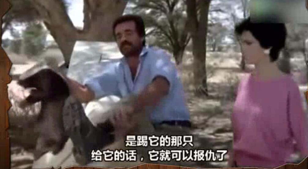 一男一女非洲旅行途中踢到蜜獾,平头哥开启影帝级的演技