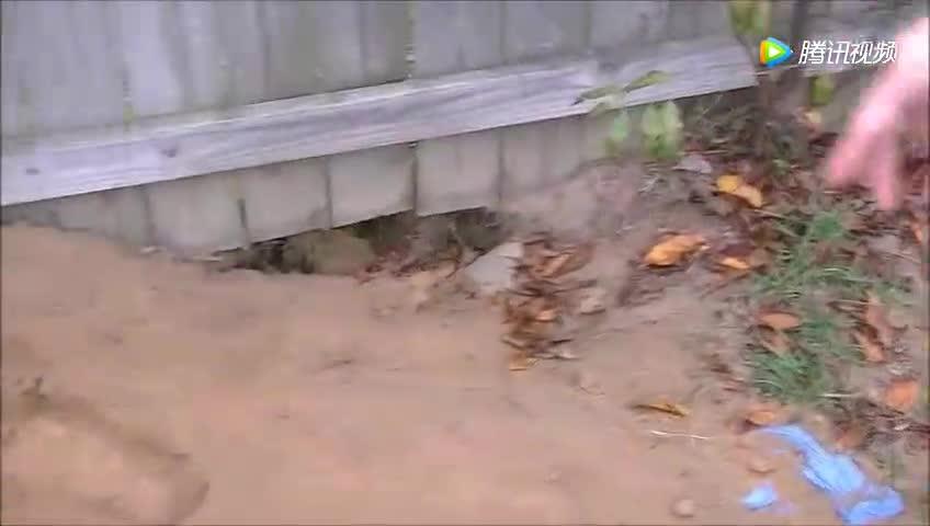 男子带狗散步发现奇怪坑洞,伸手一探竟拧出个大家伙