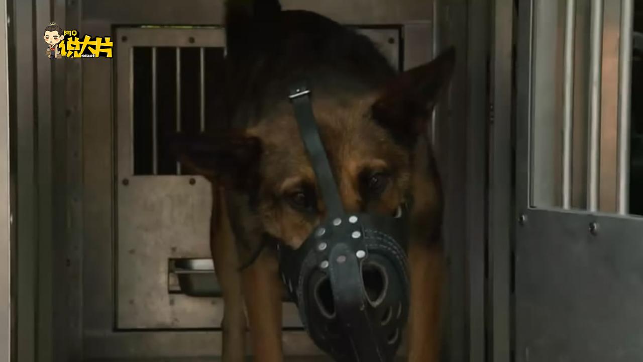 #经典看电影#主人战场牺牲,从小带大的军犬从此一蹶不振,直到看到了仇人