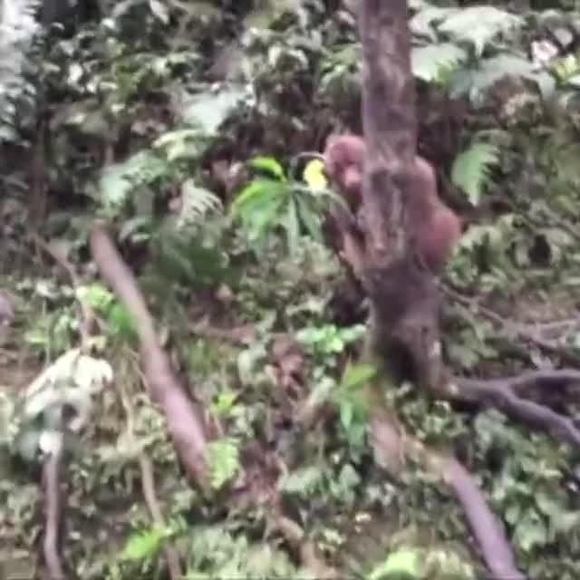 美女给猴子拍照,结果手机不见了