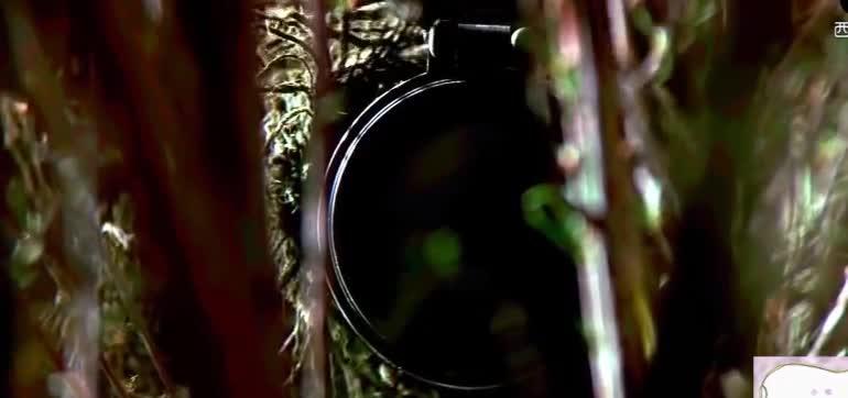 世界一流狙击手,隐藏在敌人脚下连续射击也没被发现