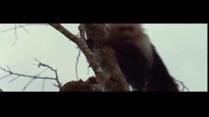 树上猴子狂叫,人类没当回事,下一秒只剩尖叫