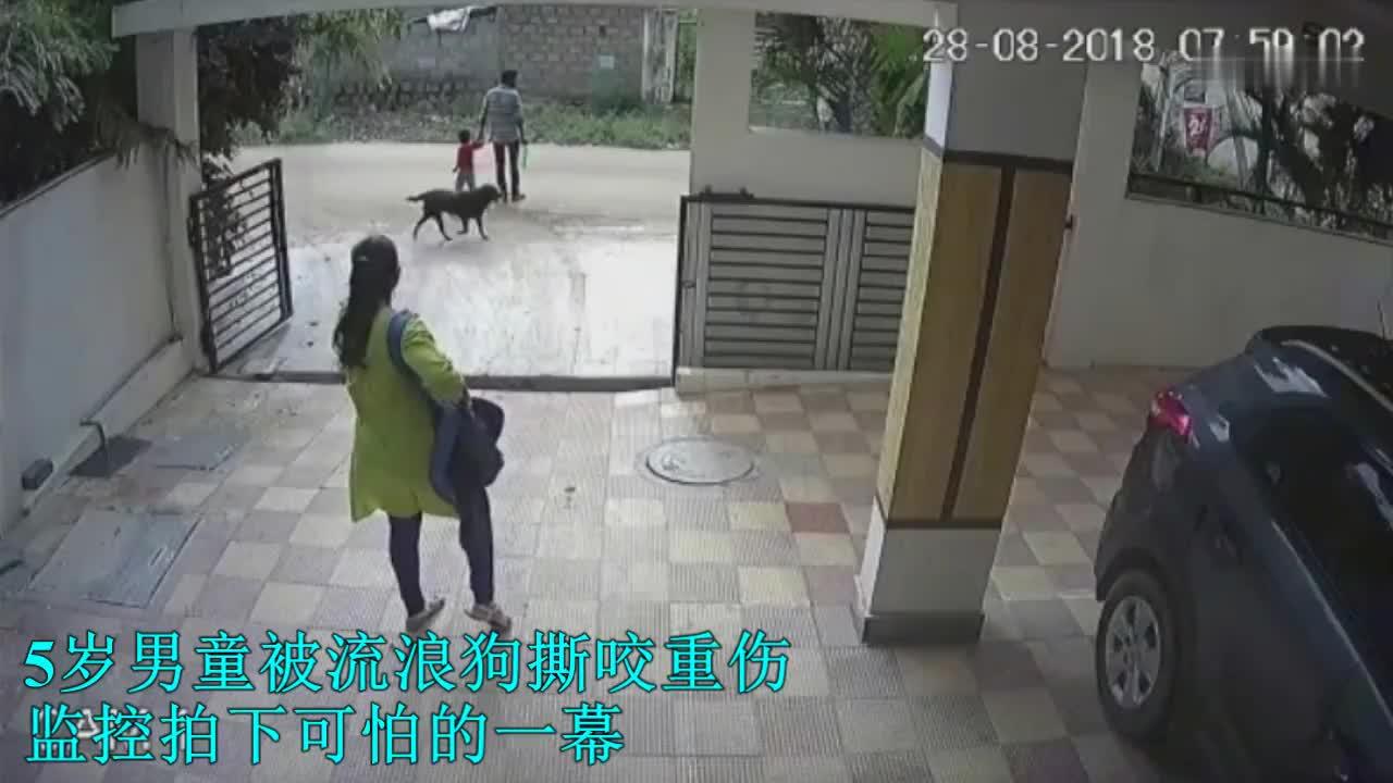 5岁男童被恶犬攻击, 父亲拼死营救, 监控拍下全过程!