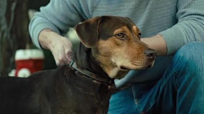 #电影最前线#《一条狗的回家路》狗狗的世界很小,她只能有一个主人