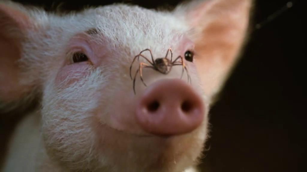 #爆笑生活#小猪为了不被主人宰杀,向蜘蛛求助,没想到蜘蛛写了几个字救了它