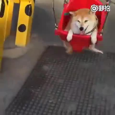 狗生最快乐的一刻,笑得合不拢嘴~