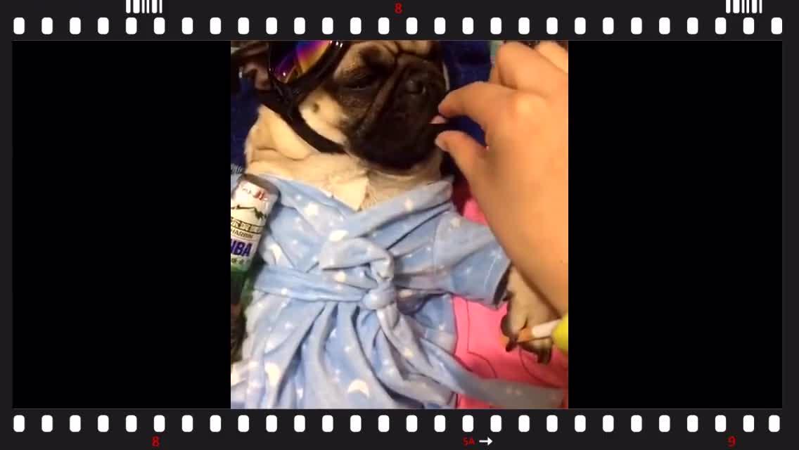 狗狗睡着以后,被女主人恶搞成这样,太喜剧了!