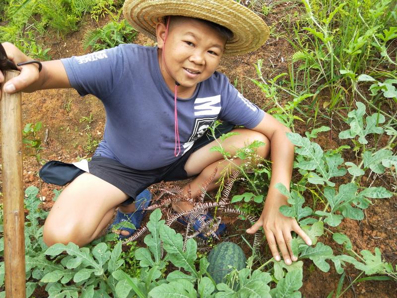 小六再来查看心爱的瓜苗,种下的收获令人欣慰,心情愉悦坐等吃瓜