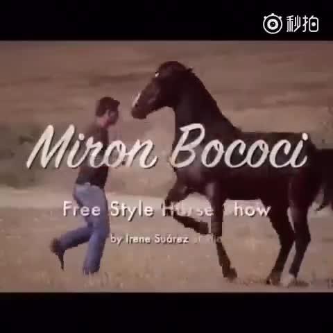 一只会跳舞的马,你见过吗?