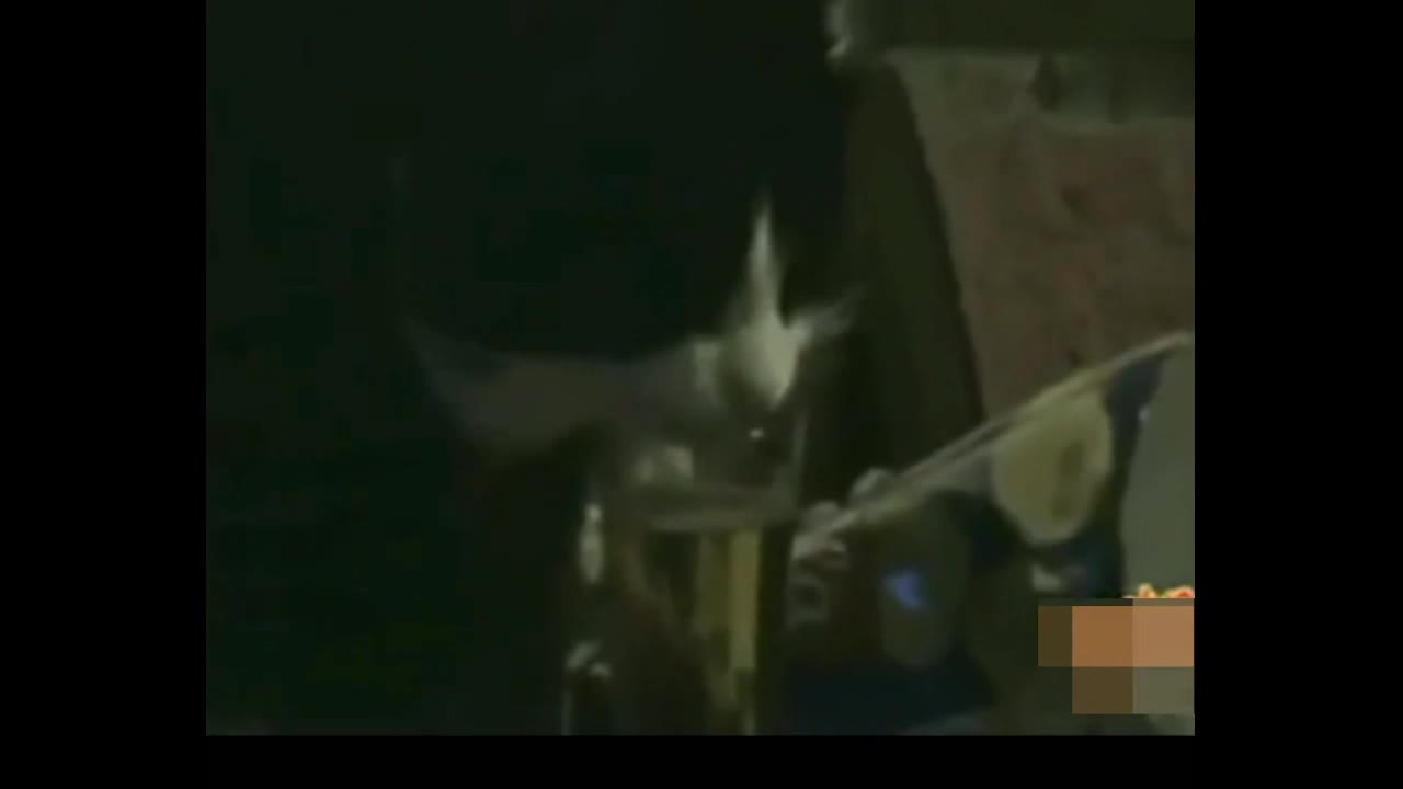 主人使坏让猫咪喝啤酒,一发不可收拾!