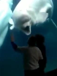 社会你鲸哥,鱼狠话不多