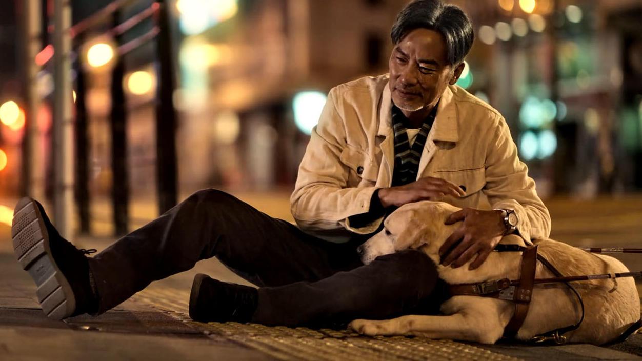 #电影迷的修养#  国产催泪电影《小Q》,导盲犬用一生陪伴主人,爱狗人士必看
