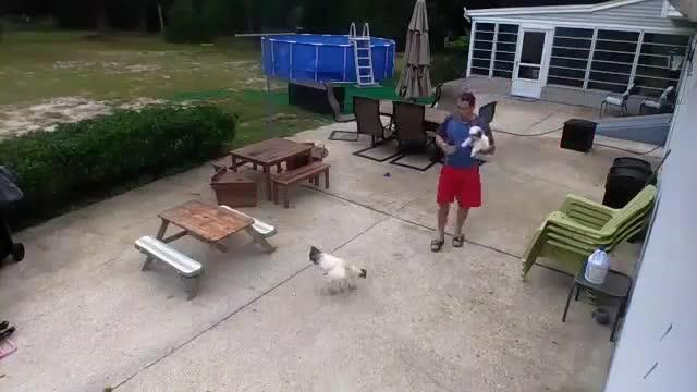 被野鸡袭击,狗狗来帮忙,笑死人了!