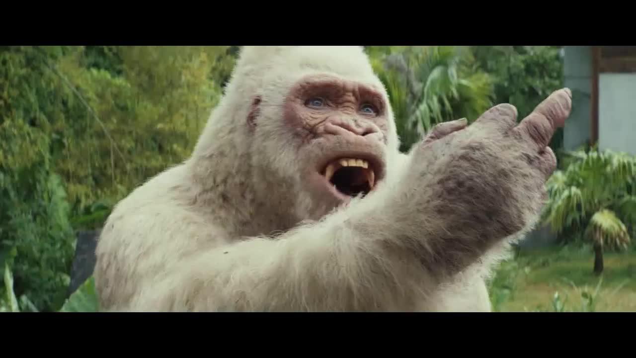 这个猩猩真逗,男子本来要给它碰拳,谁知猩猩弄了个鄙视的手势