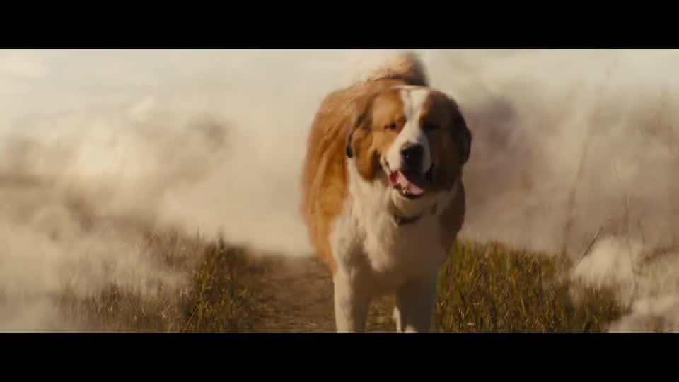 #电影迷的修养#暖化了!《一条狗的使命2》正片片段,贝利伊森天堂重逢